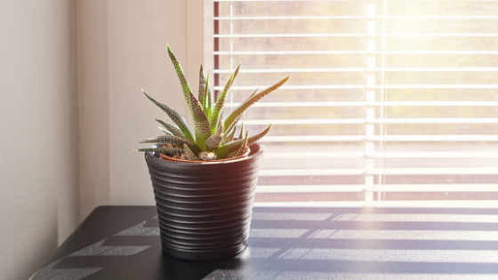 fire season indoor air quality tips
